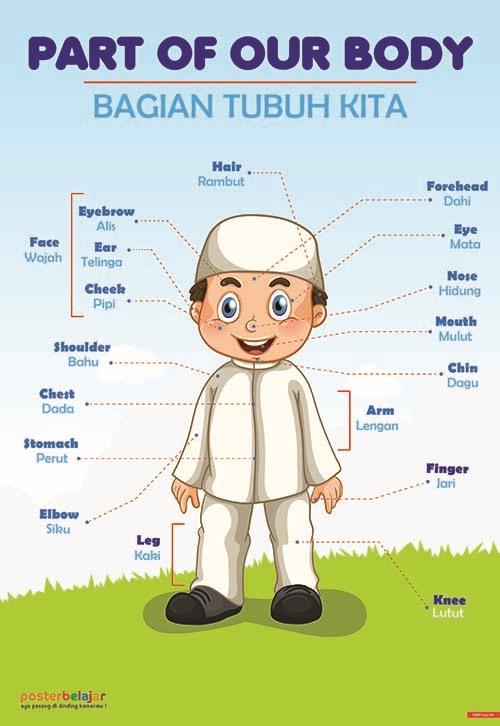 Posbel Poster Belajar Anggota Tubuh Tipe 04 Poster Pendidikan Poster Belajar