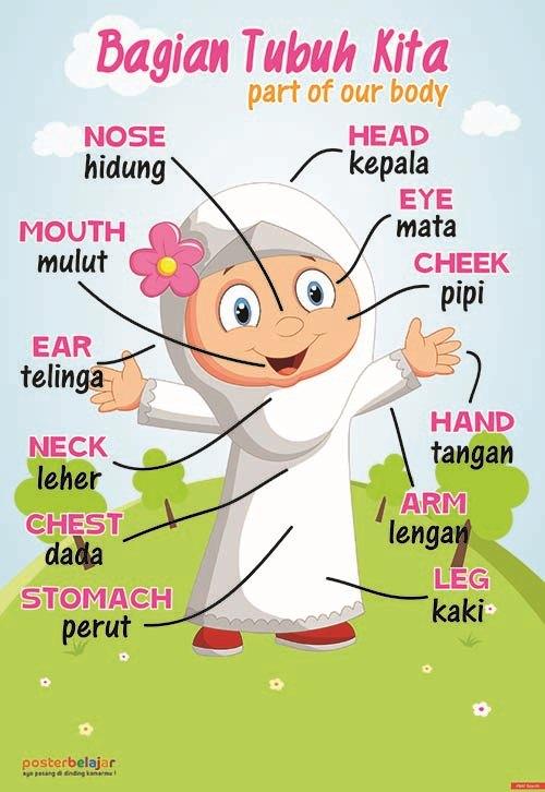 Posbel Poster Belajar Anggota Tubuh Tipe 05 Poster Pendidikan Poster Belajar